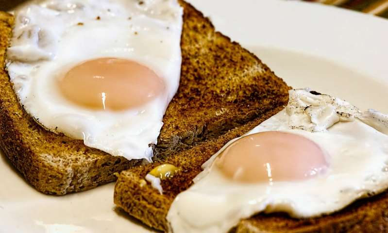 Nutritionists Say Consuming Eggs Does Not Mean High-Fat Intake